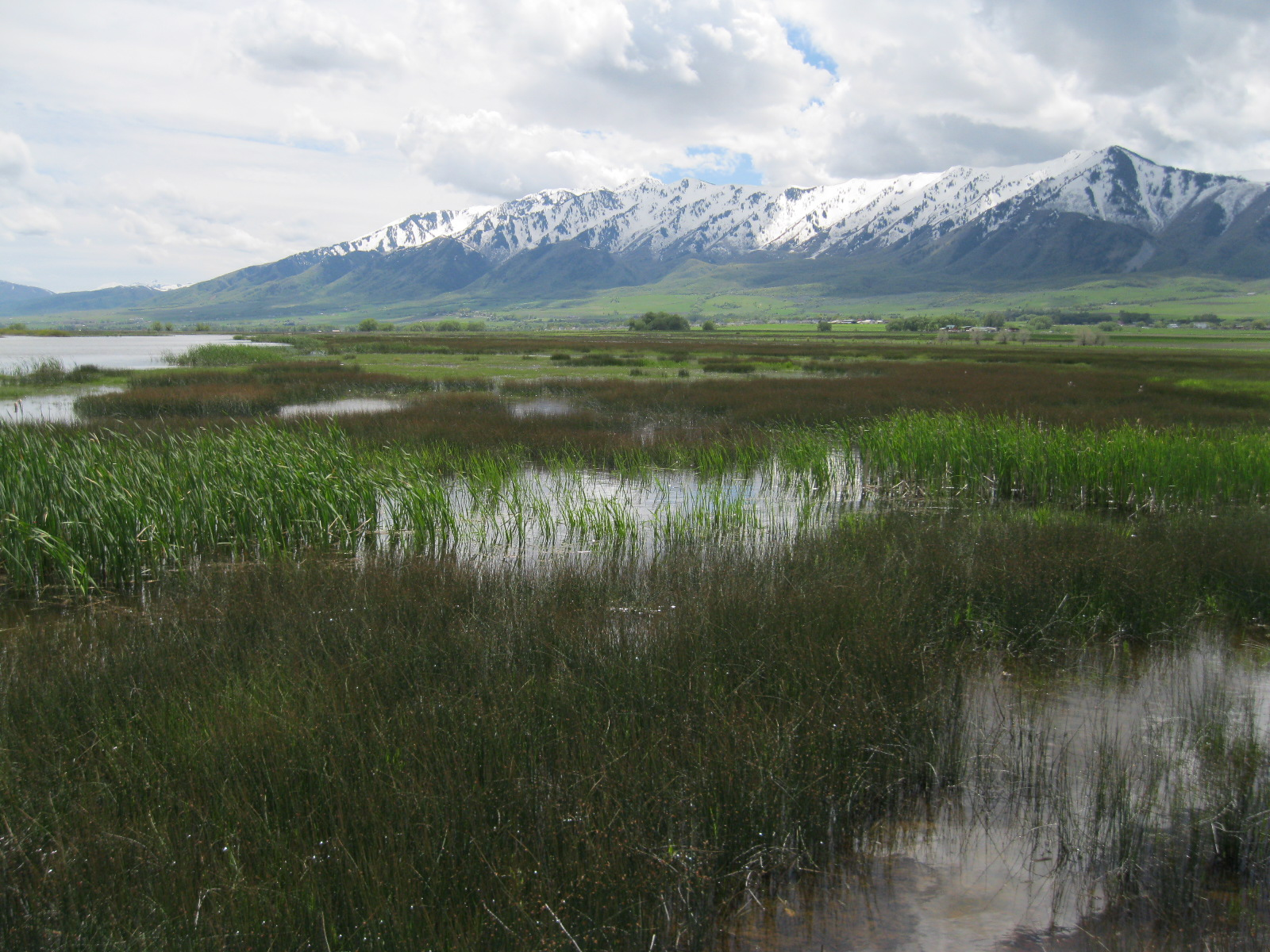 Identification And Mapping Of Jurisdictional Wetland Boundaries In Accordance With Us Army Corps Of Engineers Delineation Manuals And Technical Standards